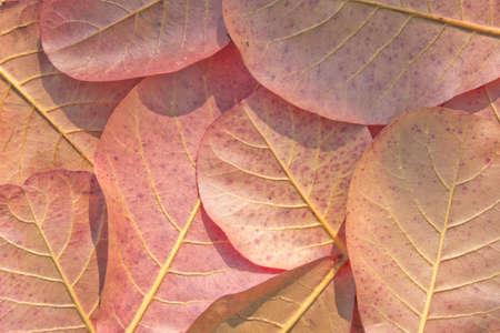 Autumn leaves background Stock Photo - 17846114