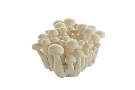 Heap of raw White Crab Mushrooms  on white Stock Photo