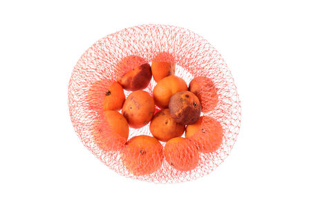 spoilage: Rotten orange in red net isolated on white background.