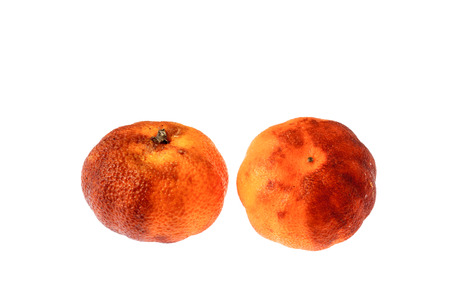 Rotten oranges isolated on white background. photo