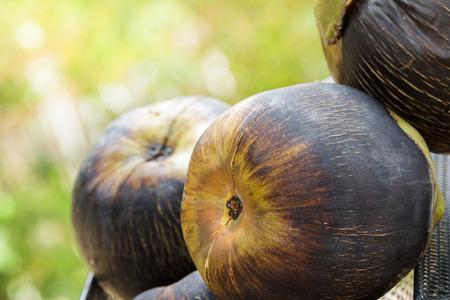 cambodian palm: primo piano zucchero di palma, Asian Palmyra palma, palma cambogiana, Toddy palma.