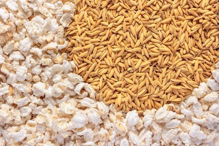 popped: Popped rice and paddy rice as background.