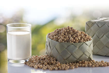 Glass of soy milk and soy bean in garden.