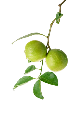 Bunch of limes with leaf on white background. Stock Photo