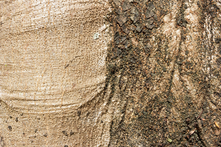 Tree bark texture as background.