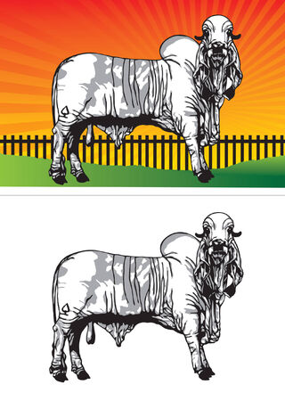Ox in the countryside. On a white background. illustration Stock Vector - 8181201