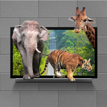 lcd tv: Animals in 3D TV Stock Photo
