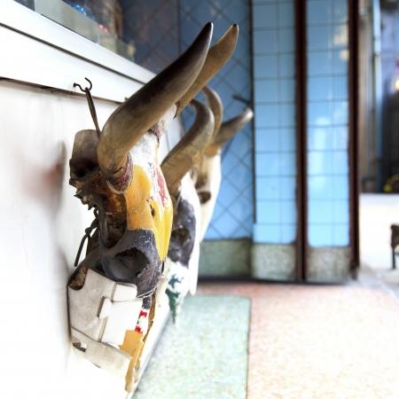 deceased: Skull of cow