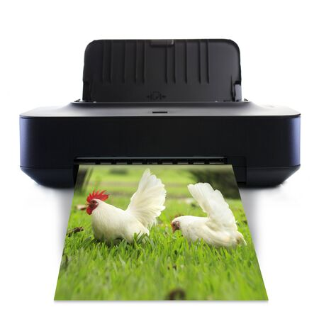 Printer and picture with White bantam  photo