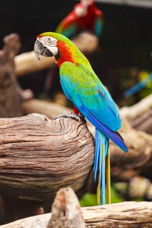 Macaw birds photo
