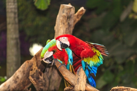 Macaw birds photo