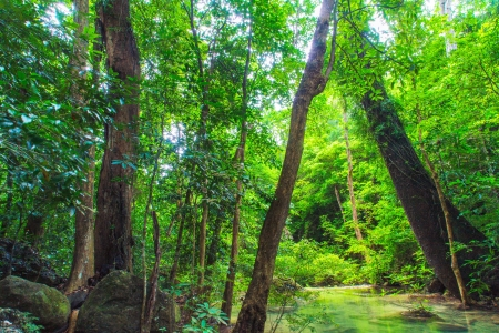 Tropical Rainforest Imagens