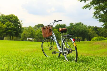 Bicycles in the park photo