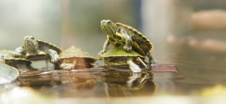 Baby turtles photo
