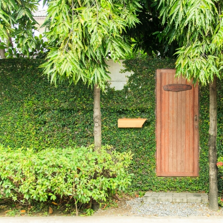 Wooden door on wall with ivy photo