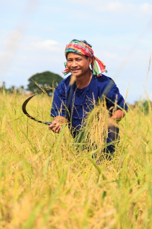 Asian farmer working in the rice field photo