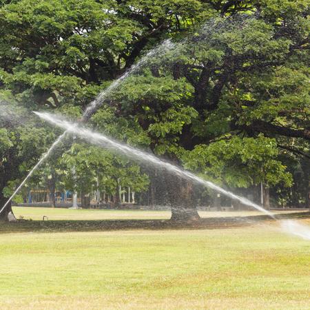 Watering photo
