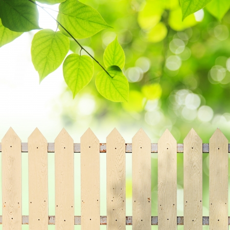 White fences with green leaves  photo