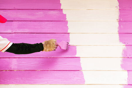 Pink color painting wall photo