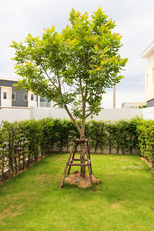 garden in new townhouses  photo