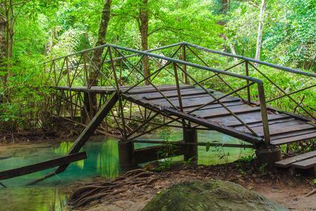 wooden bridge: Wooden bridge in the forests