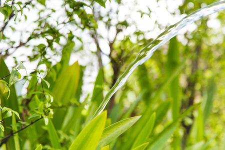regar las plantas: Plantas Riego
