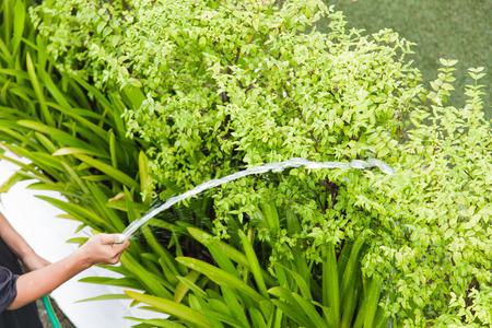 regando plantas: Plantas Riego