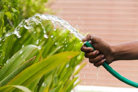 watering plants: Watering plants