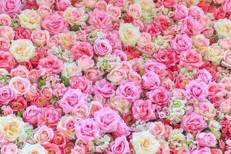 Beautiful colorful roses background Stock Photo
