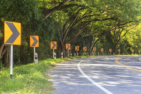 curve road: Trees and Curve road
