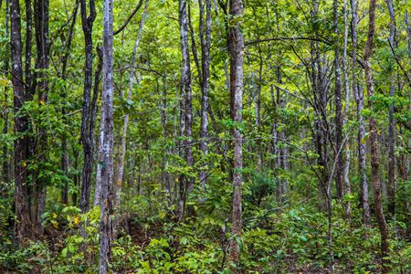 dense forest: Tropical dense forest Background Stock Photo