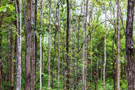 Tropical dense forest Background Stock Photo