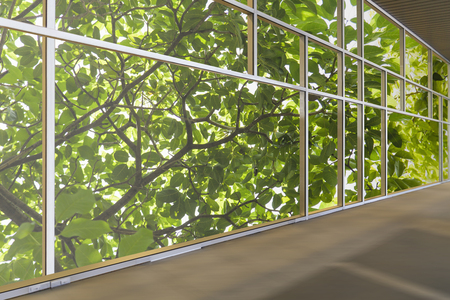 green office: Windows in modern office building, Green business and office building