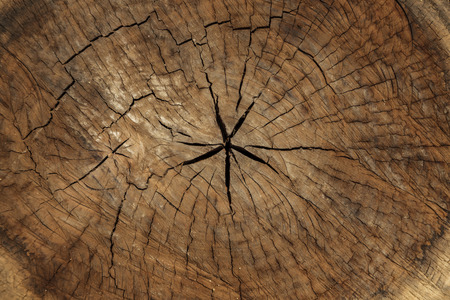 timber cutting: Wooden texture, Logs crosscuts on the timber cutting Stock Photo