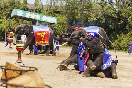 show garden: NAKHON PATHOM - MARCH 17: The famous elephant show at The Rose Garden Nakhon Pathom Province on March 17, 2016 in Nakhon Pathom, Thailand