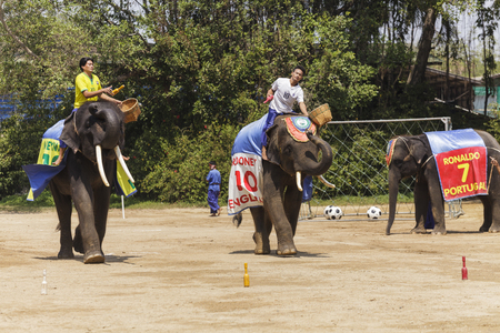 march 17: NAKHON PATHOM - MARCH 17: The famous elephant show at The Rose Garden Nakhon Pathom Province on March 17, 2016 in Nakhon Pathom, Thailand