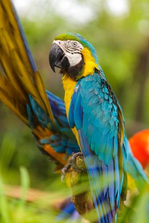 aviary: Macaw birds