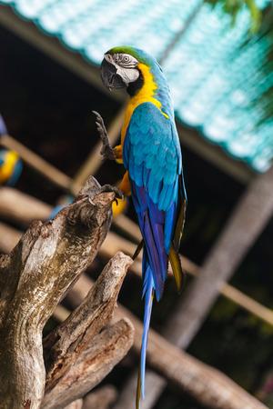 macaw: Macaw birds
