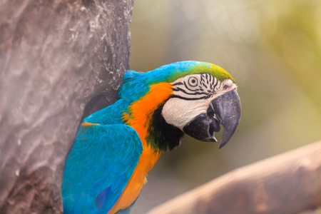 ararauna: Macaw birds