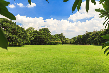 Green trees in beautiful park under blue sky