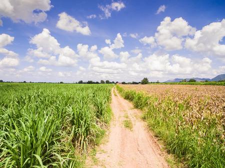 arando: Aerial Views of Fields and Agricultural Parcel, Sugarcane plantations Foto de archivo