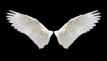 Angel wings, Internal white wing plumage with clipping part Reklamní fotografie