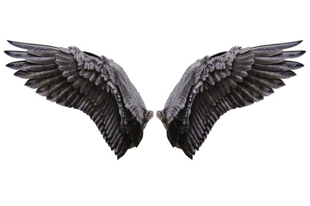 Angel wings, Natural black wing plumage with clipping part