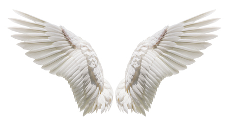 Angel wings, Natural white wing plumage with clipping part Stock Photo