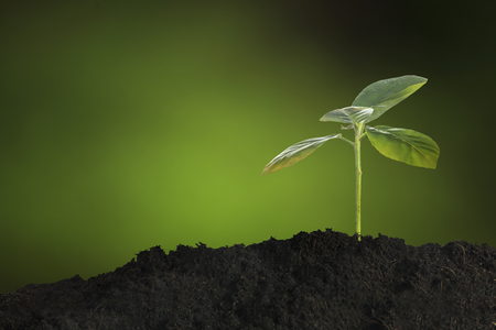 seeding: Growing young plant in morning sunlight on nature background