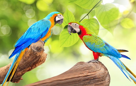Colorful Macaw bird at tree branch in morning sunlight on nature background