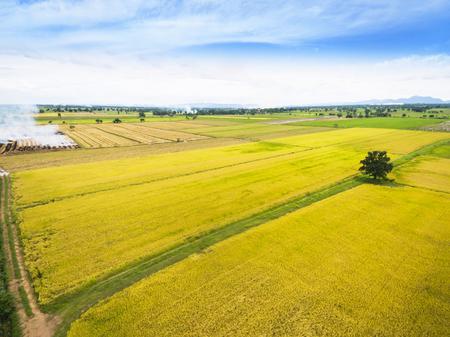 Luchtmening van gele padievelden in Thailand Stockfoto