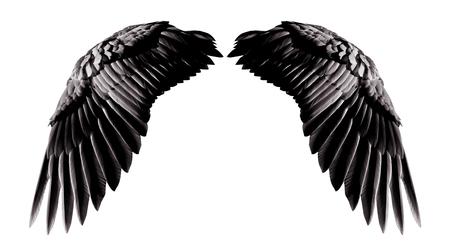 천사 날개, 클리핑 부분과 흰 배경에 고립 된 자연 검은 날개 깃털