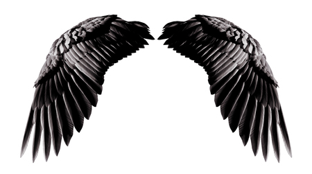 Angel wings, Natural black wing plumage isolated on white background with clipping part Stock fotó