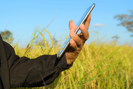 Farmer standing in a rice field with a tablet